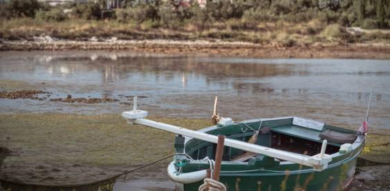 Boot im Sumpf