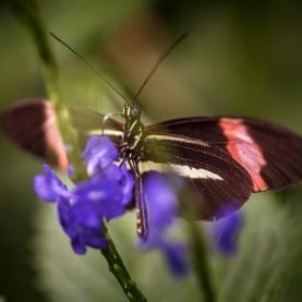 Schmetterling und lila Blume
